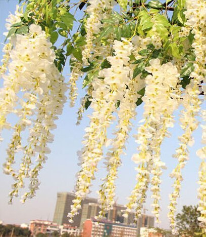 3.4 Ft Realistic Romantic Classic Artificial Fake Wisteria Vine Ratta Silk Flowers for Garden Floral Decoration DIY Living Room Hanging Flower Plant Vine Home Party Wedding Simulation Decor - White, 12 Pcs