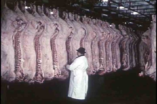 classic-beef-pork-industry-films-dvd-1920s-1960s-butcher-shop-meat-packing-meat-canning-cattle-pig-f