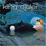 Somateria Spectas by King Eider (2007-12-21)