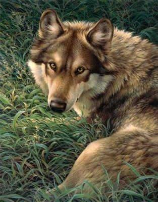 Gray Wolf Queen Size Plush Raschel Blanket 79X95 front-325123