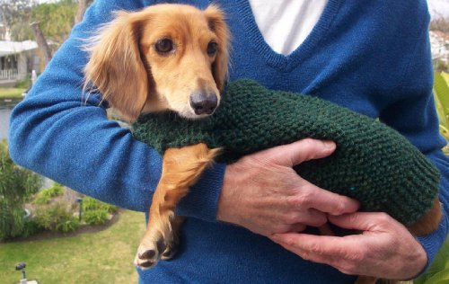 Knitting patterns for dachshund dog sweaters