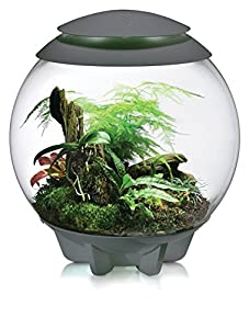 biOrb Air Terrarium, 16-Gallon, Grey