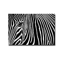 Zebra in the Lisbon Zoo by Andy Mumford Premium Gallery-Wrapped Canvas Giclee Art (Ready-to-Hang)
