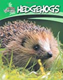 Sally Morgan British Wildlife: Hedgehogs