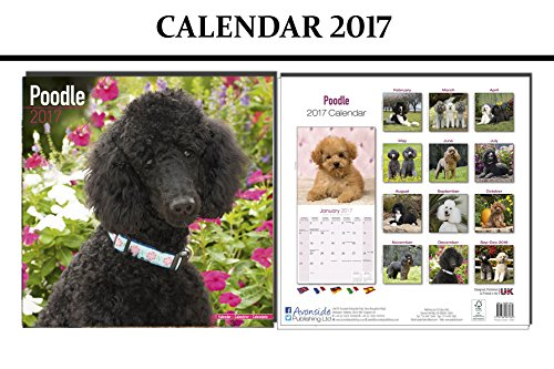 POODLE DOGS CALENDARIO 2017