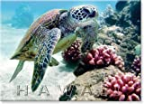 Bebe - Hawaii Sea Turtle by Monica & Michael Sweet - Hawaiian Art Collectib ....