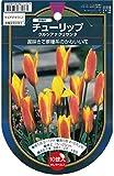 【Bulb】Tulip species clusiana chrysantha 原種チューリップ・クルシアナ・クリサンタ (10球×1袋・10%OFF)