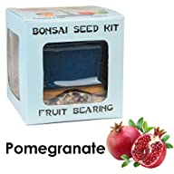 Eve's Pomegranate Bonsai Seed Kit, Fr…