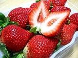 赤くて丸くて大きくて旨い苺!福岡のいちご【甘王あまおう】2パック入