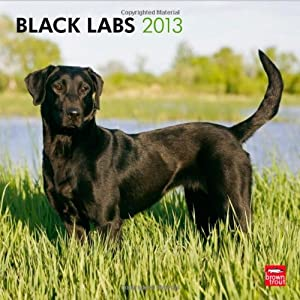 Labrador Retrievers, Black 2013 Square 12X12 (Multilingual Edition)