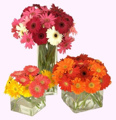 Send Fresh Cut Flowers - 40 Gerber Daisies