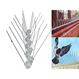 7.5CM HIGH ANTI PERCH BIRD PIGEON SEAGULL INTRUDER DEFENDER / DETERRENT FENCE WALL SPIKES - AVAILABLE IN 2, 4, 6, 8, 10 METERS (2 METER)