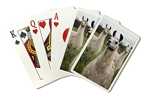 Llamas (Playing Card Deck - 52 Card Poker Size with Jokers)
