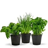 EASY TO GROW HERBS SEEDS COMBO- BASIL, CHIVES AND PARSLEY 30+ SEEDS EACH BY Super Agri Green