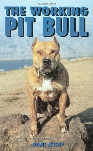 Working Pit Bull