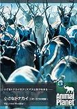 アニマル・プラネット 小さなトナカイ ~オーロラの奇跡~ [DVD]