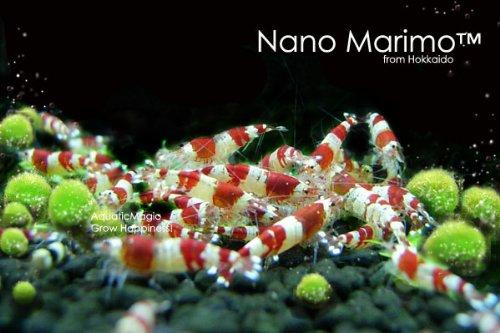 luffy-8482-nano-marimo-bola-x-6-pcs-vivir-acuario-planta-acuatica-para-fish-tank