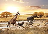 JP London MDXL4169PP Prepasted Non Woven Safari Plain Removable Full Wall Mural at 12' Wide By 8.5' High