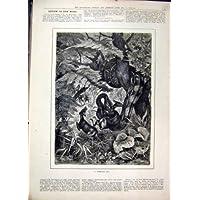 Impresión Antigua de la Bella Arte 1879 del País de los Ciervos de la Consumición del Árbol de la Serpiente