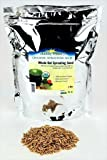 Organic Non-GMO Whole Oat Grain Seeds (With Husk Intact)- 2 Lb Re-Sealable Pouch- Oats Seed Grains, for Sprouting, Oat Grass, Animal Feed, Storage & More