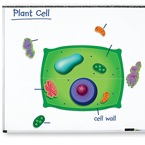 Learning Resources Giant Magnetic Plant Cell (Plant Cell Model compare prices)