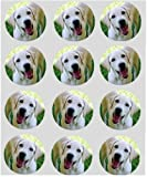 12 Labradore dog rice paper fairy cup cake 40mm toppers pre cut decoration
