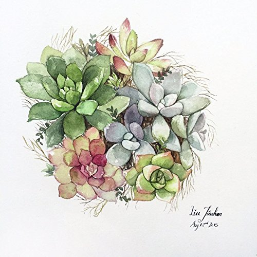 Jiachen Art Succulent Plant Watercolor Copy Photo Painting Painting Print Fine Art Print Wall Art Home Decor Wall Hanging Christmas Gift,Four Size