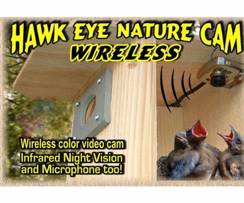 birdhouse-spy-cam-bcamhew-hawk-eye-wireless-spy-camera