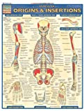 Muscular Origins & Insertions (Quickstudy: Academic)