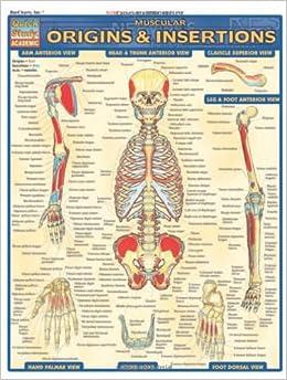 Muscular Origins & Insertions (Quickstudy: Academic): Inc. BarCharts