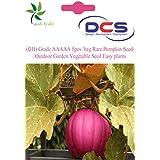 (011)Grade AAAAA 5pcs /bag Rare Pumpkin Seeds Outdoor Garden Vegetable Seed Easy Plants Dark Pink Colour
