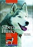 Siberian Husky: Charakter - Erziehung - Gesundheit