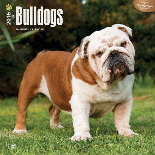 Bulldogs 2016 - Bulldoggen - 18-Monatskalender mit freier DogDays-App: Original BrownTrout-Kalender