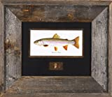 Rainbow Trout with Fly Joesph Tomelleri 16x14 Framed Art Print Fishing Country Rustic Picture