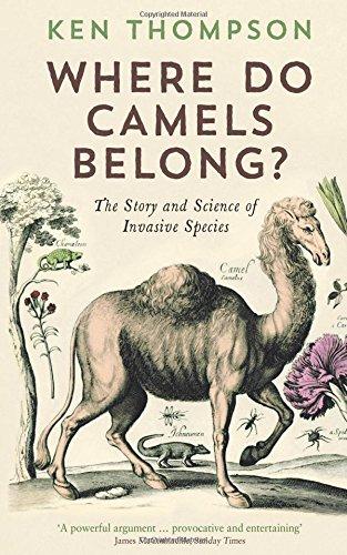 Where Do Camels Belong?