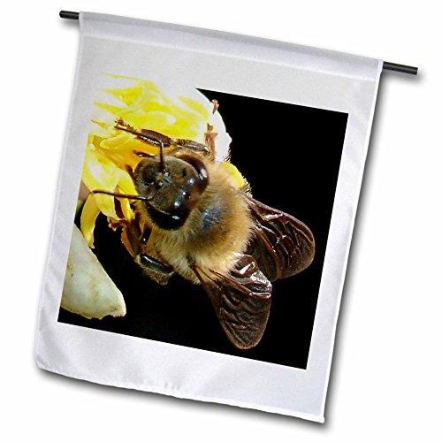 "3dRose FL _ 46834_ 1Honey Bee On Lemon Blossom ""Ape Fiore Honey Bee Insetti Honeybee Lemon Tree giardino Bandiera, 12da 18pollici"