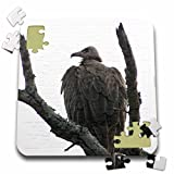 Angelique Cajam Safari Birds - South African Hooded Vulture in a tree - 10x10 Inch Puzzle (pzl_20115_2)