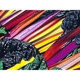 Mangold - Bright Lights - 50 Samen