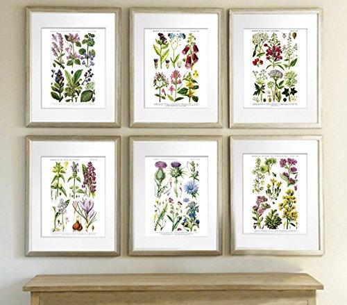 English Wild Flowers Botanical Art Reproduction Unframed Set
