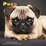 Pugs Calendar - 2016 Wall calendars -...