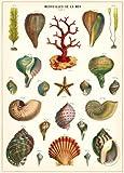 Cavallini & Co. Merveilles De La Mer Decorative Decoupage Poster Wrapping Paper Sheet