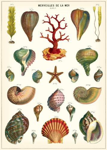 Cavallini Geschenkpapier Wonders of the Sea