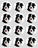 12 Dog Border Collie rice paper fairy cup cake 40mm toppers pre cut decoration