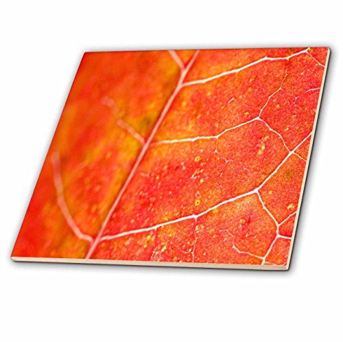 Yves Creations Colorful Leaves - Orange Leaf - 12 Inch Ceramic Tile (ct_36747_4)