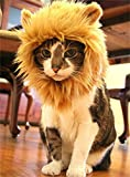 (つながる)Vedem 猫が ライオンに大変身 ウイッグ コスチューム (M) [並行輸入品]