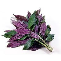 Handama, Suizenjigusa, Okinawa Spinach - Gynura - Edible Houseplant - 4