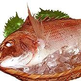 まぐろ屋新鮮組 瀬戸内海産 天然マダイ 一匹(300g-400g) 【お食い初めなどに】