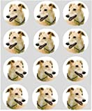 12 Dog Greyhound rice paper fairy cup cake 40mm toppers pre cut decoration