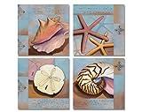 4 Beach Sea Shell Art Prints Sanibel Conch Starfish Nautilus 12x12