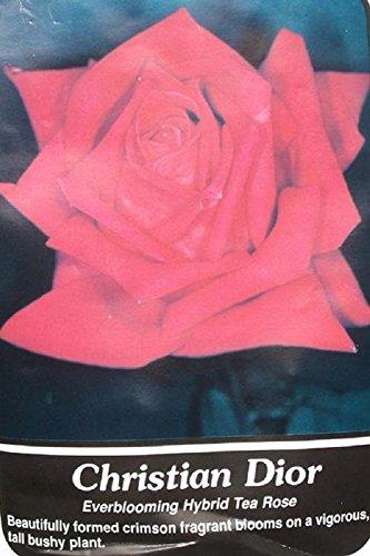 Christian Dior Crimson Rose Live Bush Plants Shrub Plant Healthy Roses (1 Gallon) (Dior Bush compare prices)